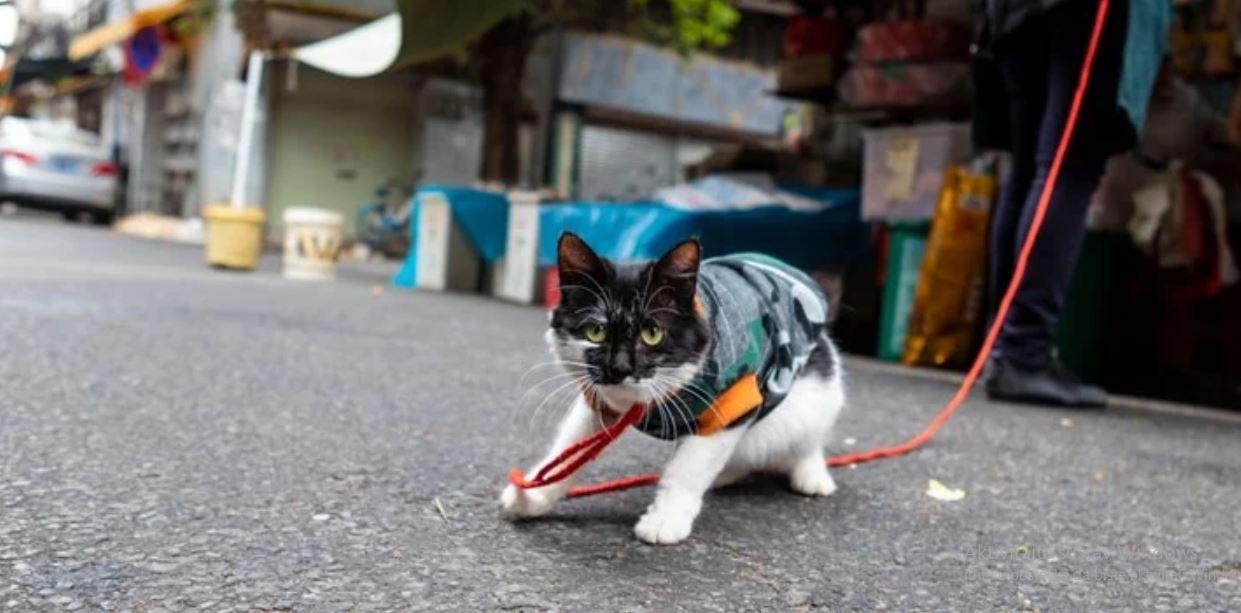 Znanost tvrdi da mačke mogu dobiti koronu, a psi ne