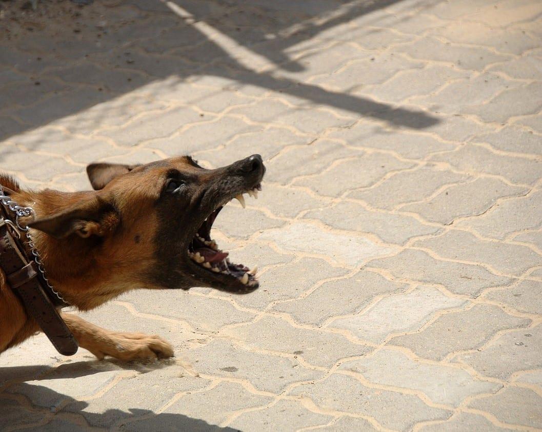 Strava u Prijedoru: Pas izgrizao 9-godišnju djevojčicu