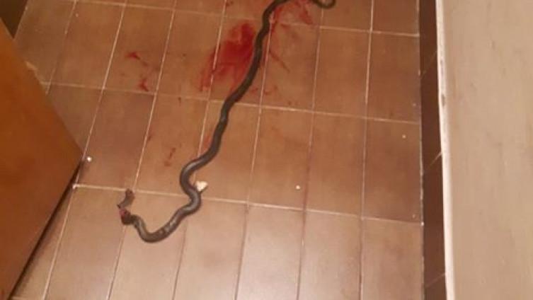 Djevojčica u sobi na trećem katu zatekla zmiju od metar
