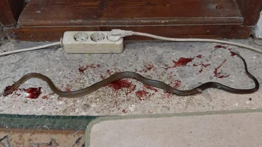 Ljubuški: Muškarac doživio strahotu u zoru, ubio je ogromnu zmijurinu