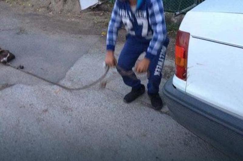 Definicija nečovjeka: Vezao psa za auto i vukao po ulici