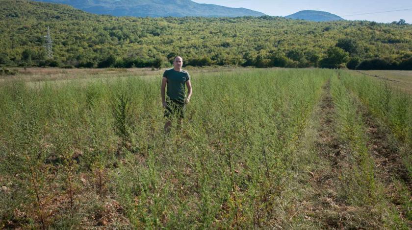 Hoće li Hercegovina svijetu dati lijek protiv koronavirusa?