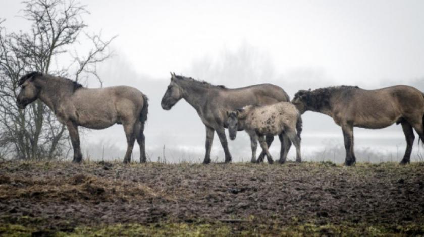 Strava nakon potresa, hoda livadama i ubija konje vatrenim oružjem