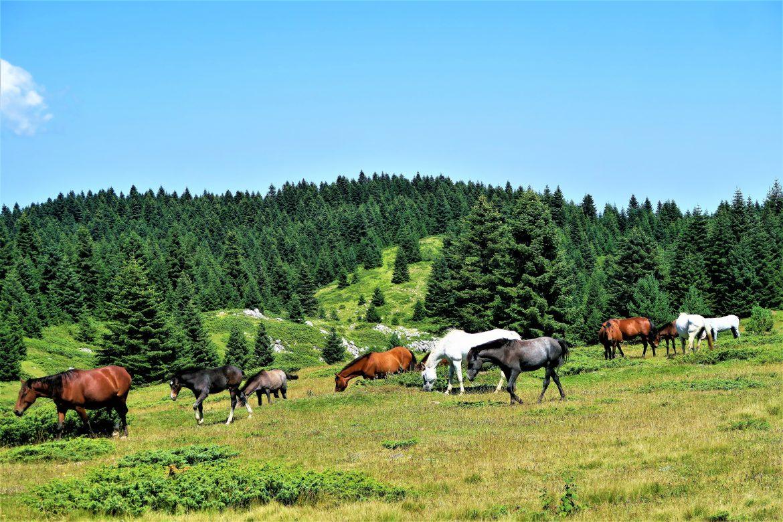 Spriječena krađa konja na Bilima, uhvaćena skupina dugogodišnjih zlostavljača