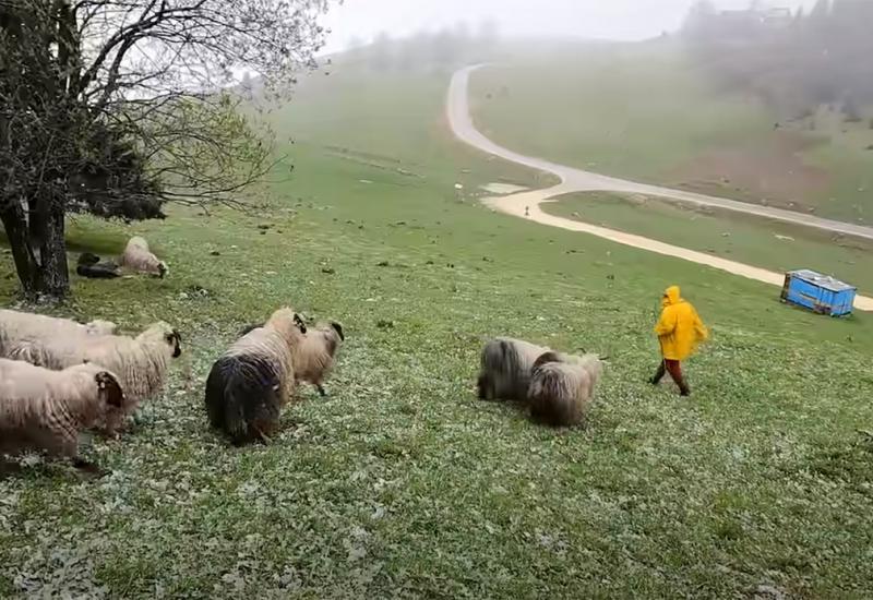 Pastiri više neće biti potrebni? Stižu dronovi za nadzor stoke…